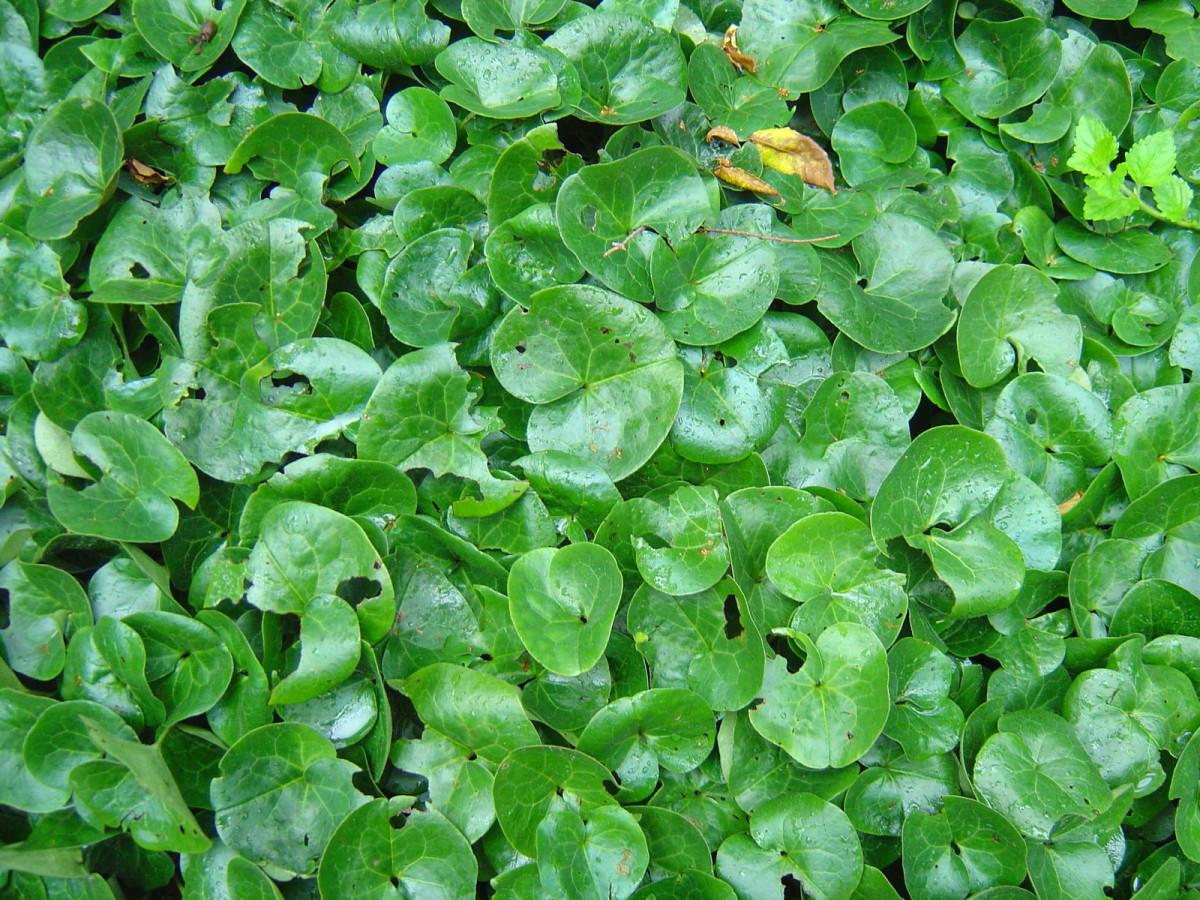 Ландшафт в цветах: зеленый, темно-зеленый, салатовый. Ландшафт в стиле экологический стиль.