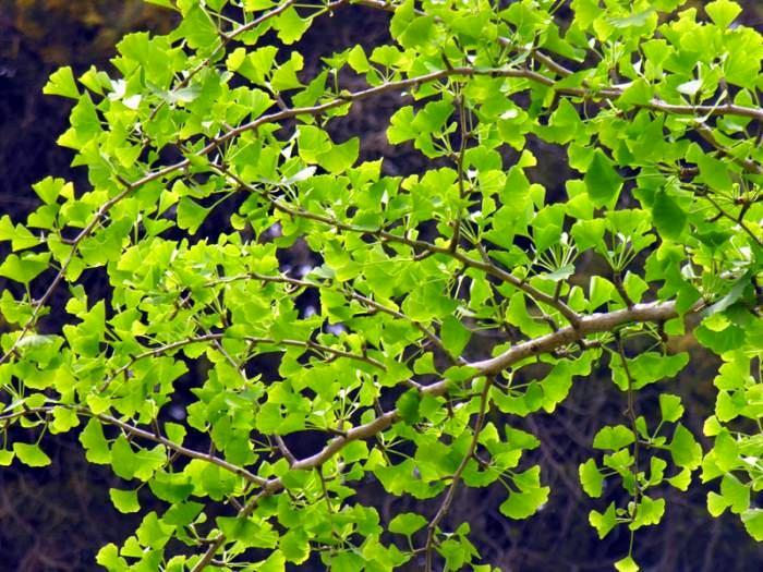 Ландшафт в цветах: серый, темно-зеленый, салатовый, коричневый, бежевый. Ландшафт в стиле экологический стиль.
